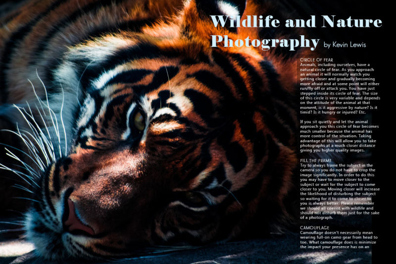 Wildlife photography tips and tricks on Lens Magazine 26